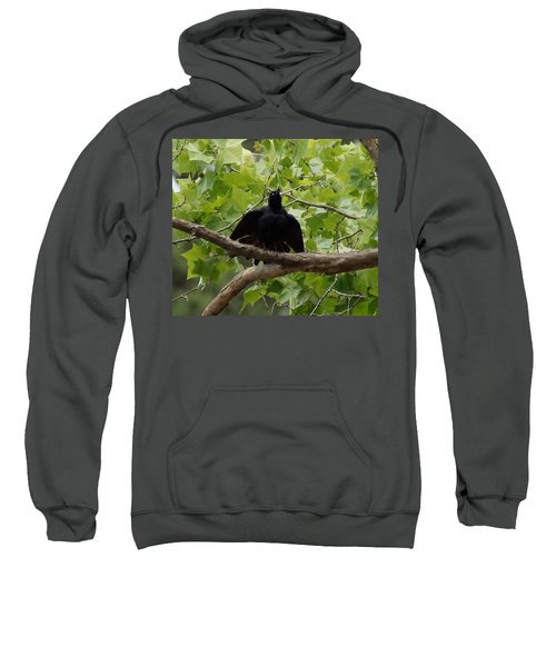 Sweatshirt featuring the photograph Brewers Blackbird In The American Sycamore by Kim Pate