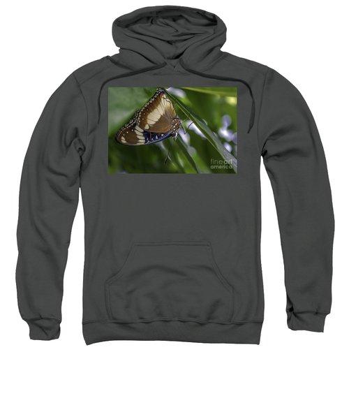 Brilliant Butterfly Sweatshirt