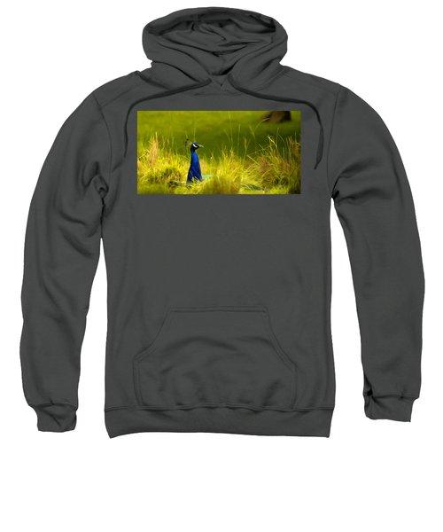 Bronx Zoo Peacock Sweatshirt