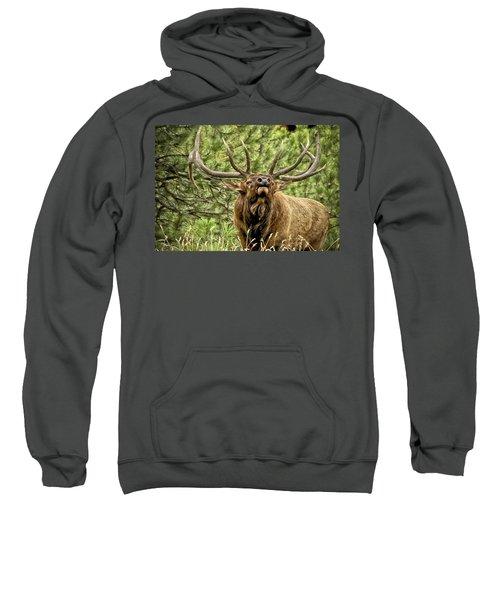Bugling Bull Elk II Sweatshirt