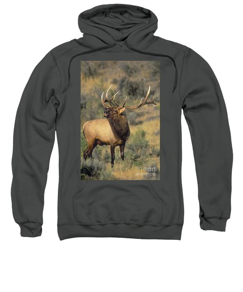 Bull Elk In Rut Bugling Yellowstone Wyoming Wildlife Sweatshirt