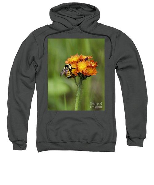 Bumble And Hawk Sweatshirt