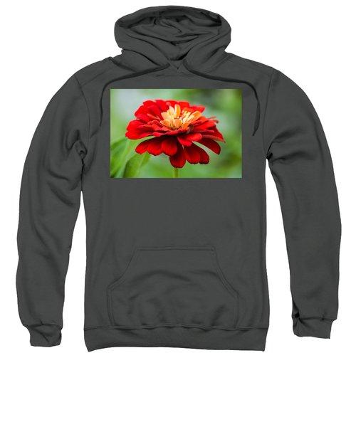 Bursts Of Color Sweatshirt