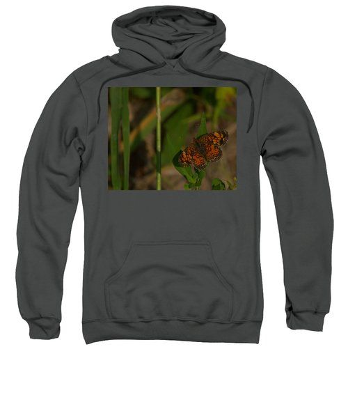 Butterfly 10 Sweatshirt