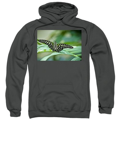 Butterfly Resting Color Sweatshirt