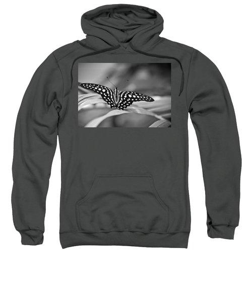 Butterfly Resting Sweatshirt