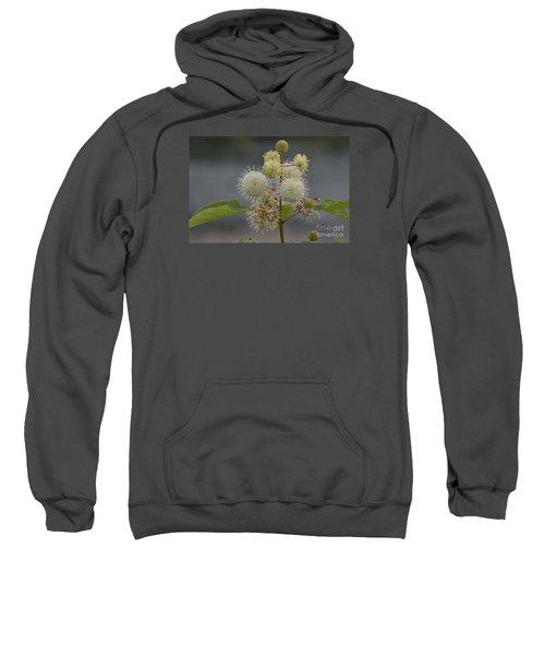 Buttonbush Sweatshirt
