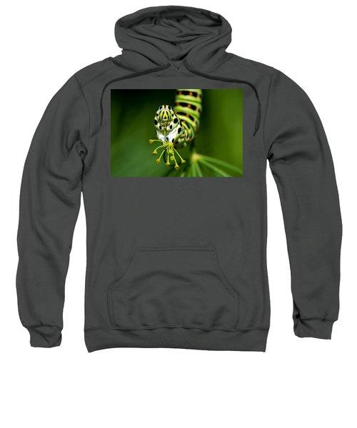 Caterpillar Of The Old World Swallowtail Sweatshirt