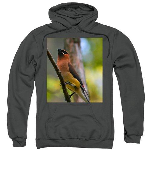 Cedar Wax Wing Sweatshirt by Roger Becker