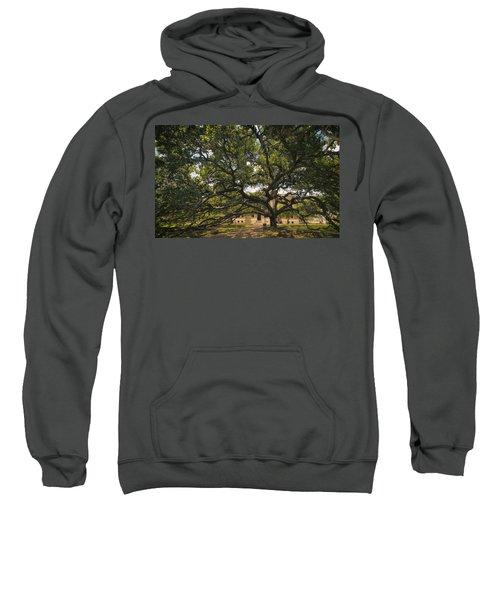 Century Tree Sweatshirt
