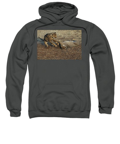 Cheeta Acinonyx Jubatus, Etosha Sweatshirt