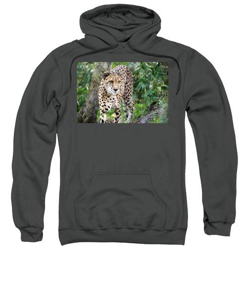 Cheetah Rainy Day Naples, Florida Usa Sweatshirt