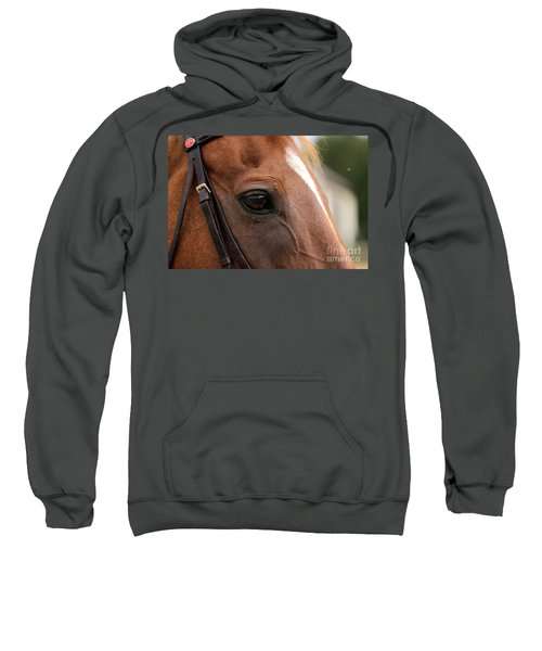 Chestnut Horse Eye Sweatshirt