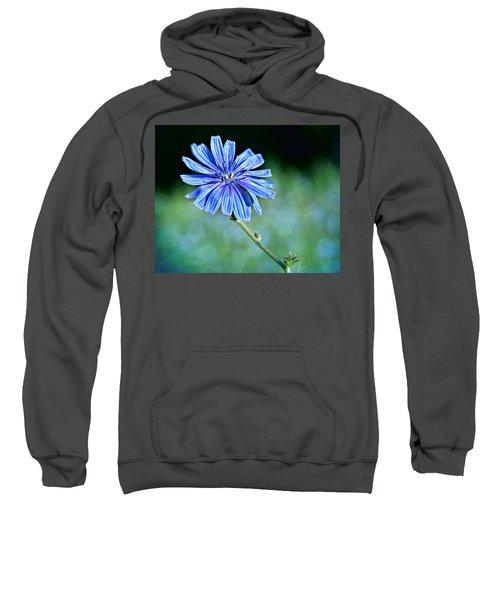 Chicory Sweatshirt