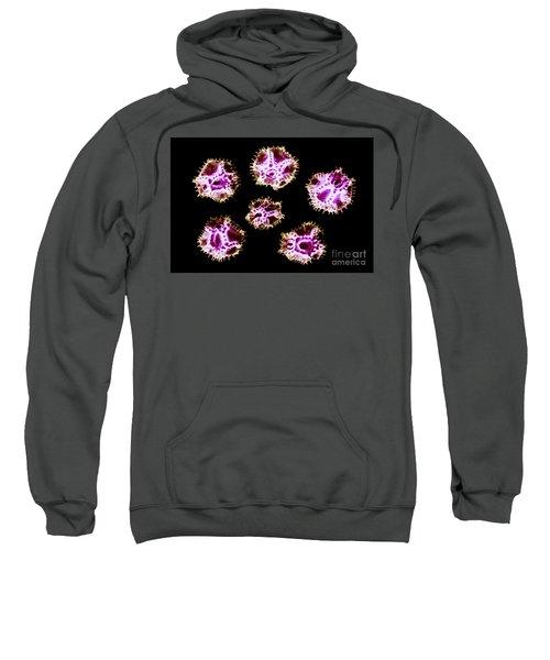 Chicory Pollen Grains Sweatshirt