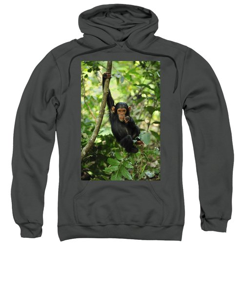Chimpanzee Baby On Liana Gombe Stream Sweatshirt