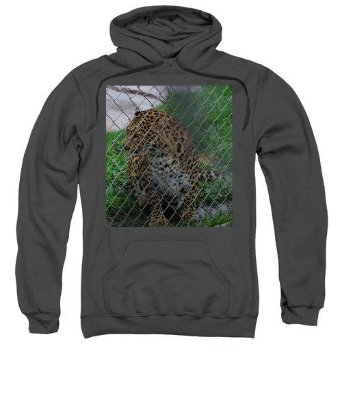 Christmas Leopard I Sweatshirt