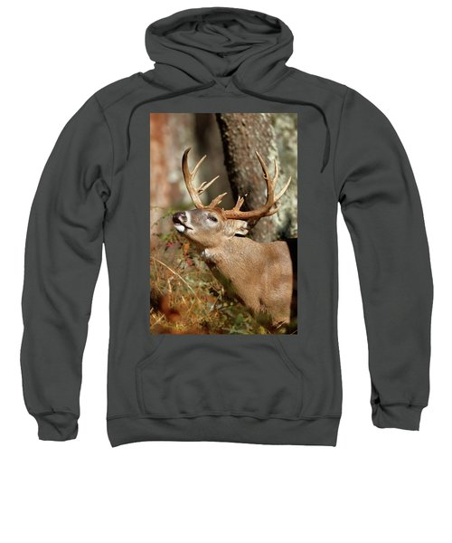 Close-up Of A White-tailed Deer Curling Sweatshirt