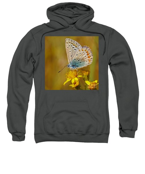 Closeup Of A Common Blue Butterfly Sweatshirt