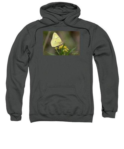 Clouded Sulphur Sweatshirt