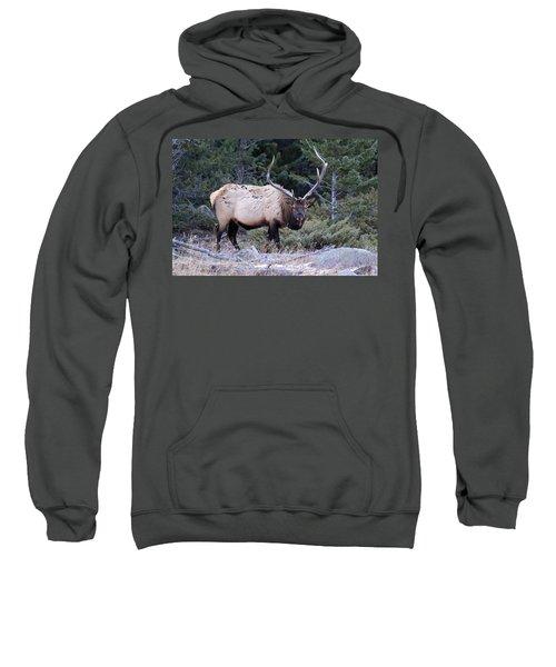 Colorado Bull Elk Sweatshirt