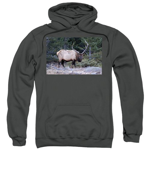 Colorado Bull Elk Sweatshirt