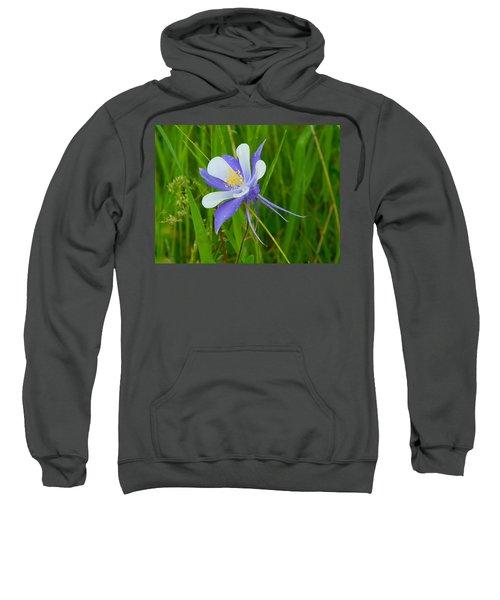 Colorado Columbine Sweatshirt