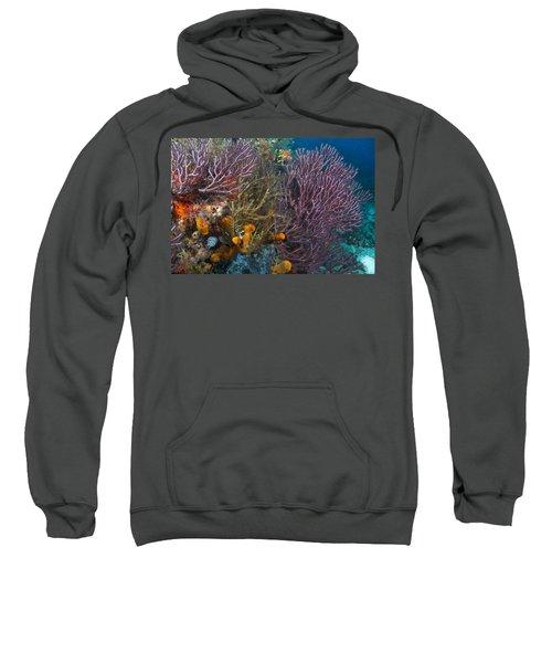 Colors Of Reefs Sweatshirt