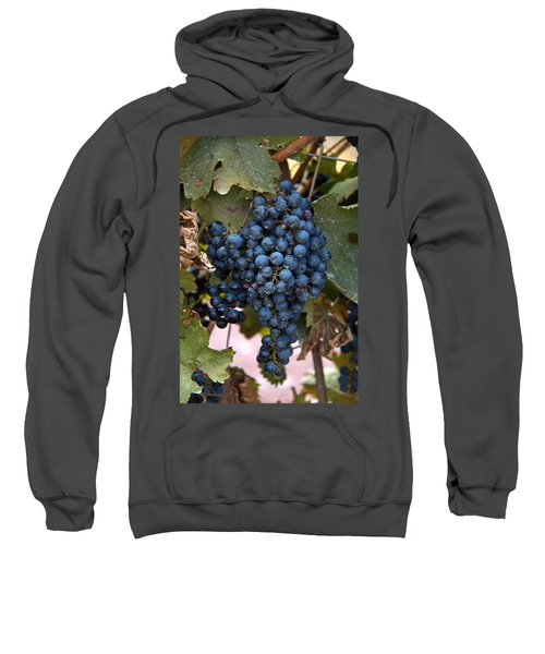 Concord Grapes Sweatshirt