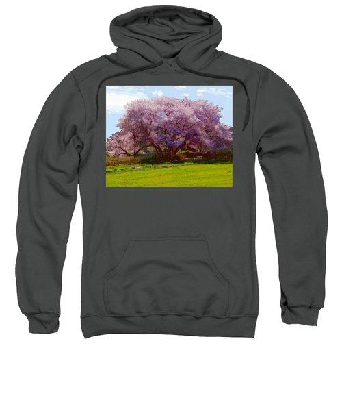 Concord Spring Sweatshirt