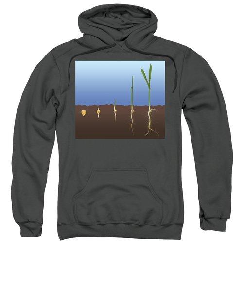 Corn Seed Germination, Illustration Sweatshirt