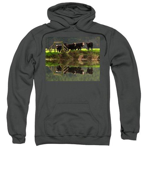 Cow Reflections Sweatshirt