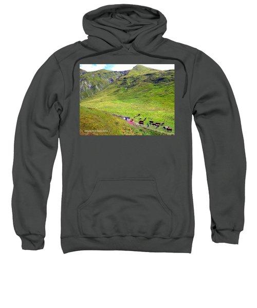 Cows In A Valley Sweatshirt