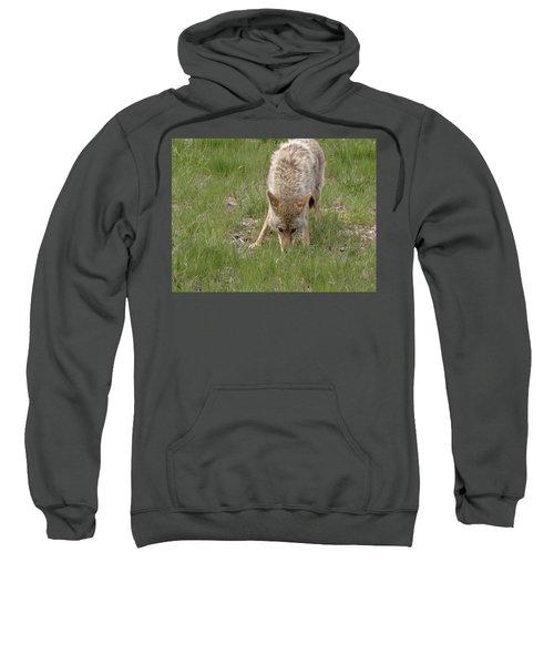 Coyote Eyes Sweatshirt