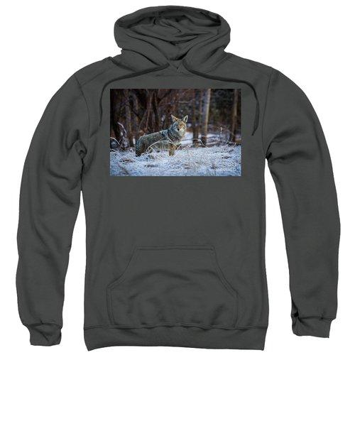 Coyote In The Meadow  Sweatshirt