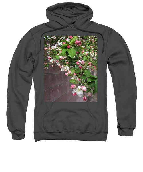 Sweatshirt featuring the photograph Crabapple Blossoms And Wall by Donald S Hall