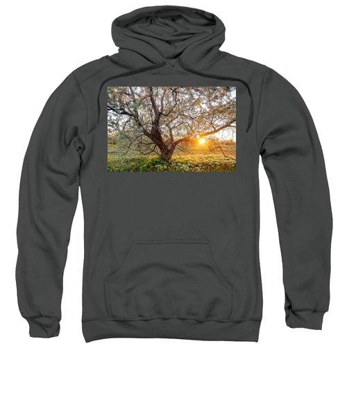 Crooked Sweatshirt