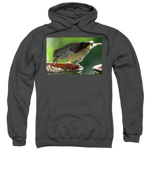 Crossbill Loxia Curvirostra Female Sweatshirt