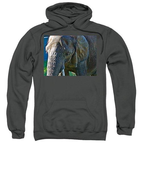 Cuddles In Search Sweatshirt