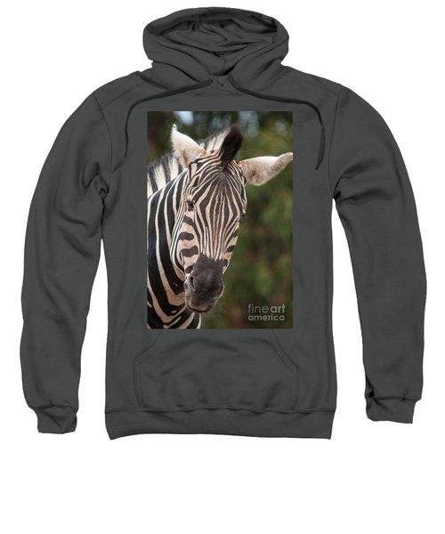 Curious Zebra Sweatshirt