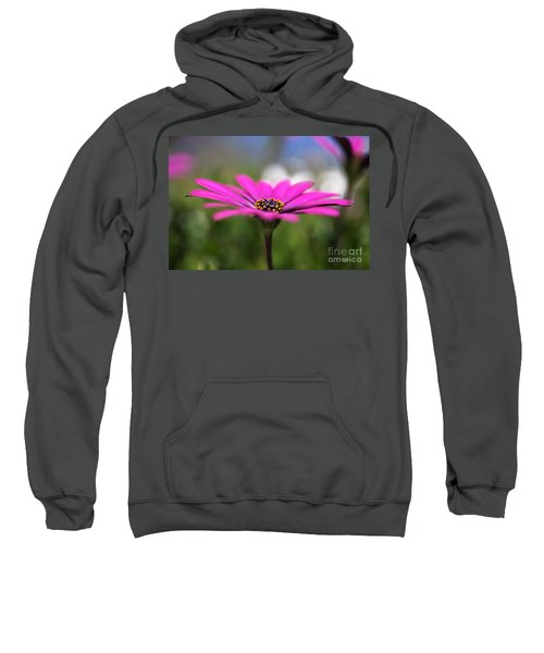 Daisy Dream Sweatshirt