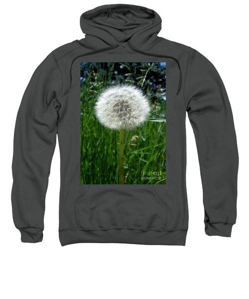 Dandelion Fluff Sweatshirt