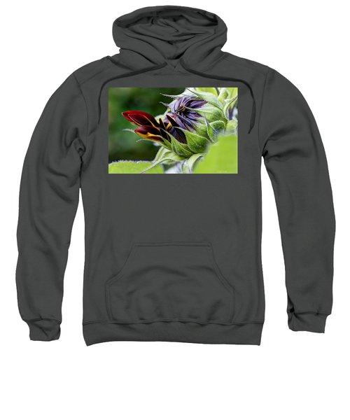 Demure Sweatshirt
