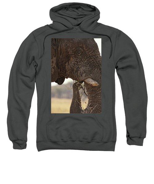 Desert Elephant Loxodonta Africana Sweatshirt