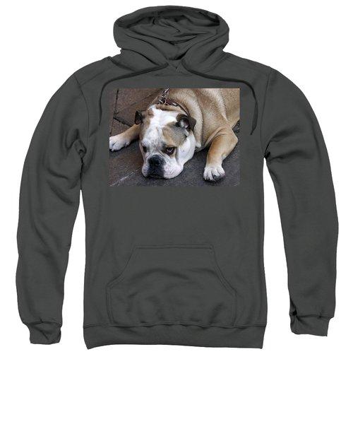 Dog. Tired. Sweatshirt