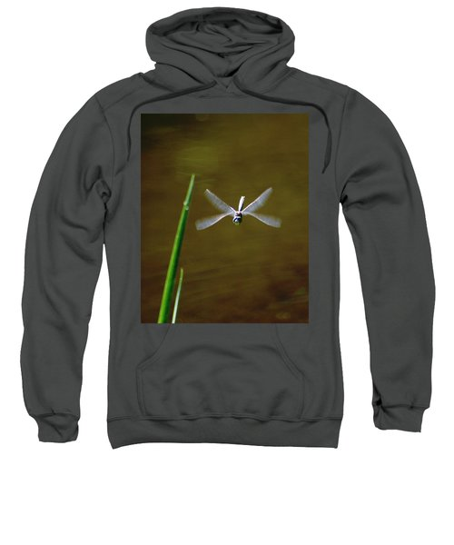 Dragonflight Sweatshirt