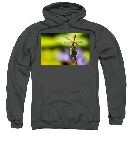 Dragonfly Display Sweatshirt