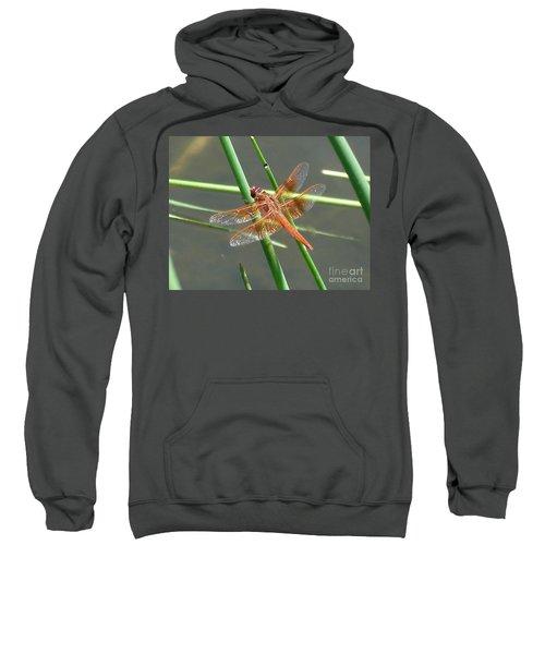 Dragonfly Orange Sweatshirt
