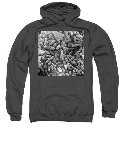 E. Coli Bacteria Sem X24,000 Sweatshirt