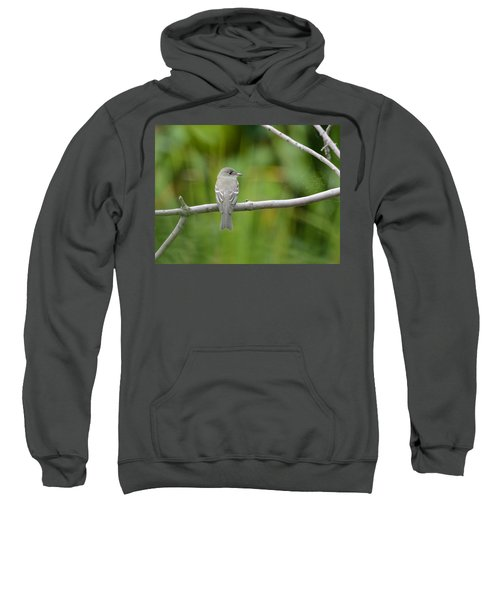Eastern Wood Pewee Sweatshirt
